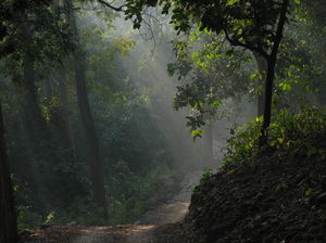 Murlen National Park 1/undefined by Tripoto