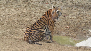 TADOBA : Wildlife Experience with the Royal CAT