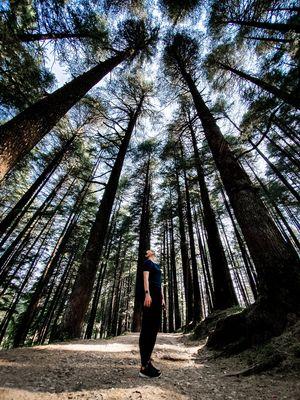 Arashiyama bamboo forest ?? nope !