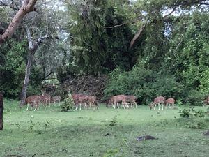 Jungle Hut Masinagudi 1/undefined by Tripoto