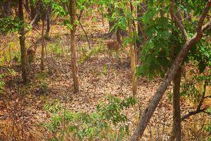 Explore wildlife in Hazaribagh Wildlife Sanctuary