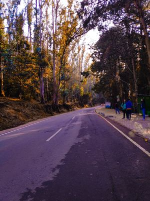 Ooty pine forest and early mrng rides