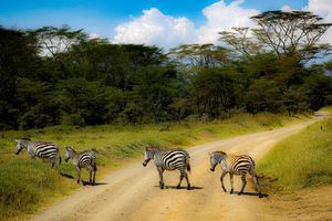 Zebra Crossing..