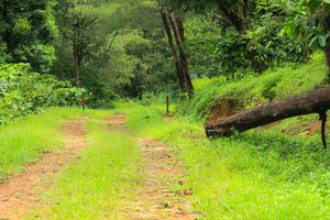 Pakuthipalam forest lodge trip