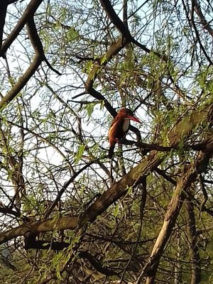 Birds' Paradise The Bharatpur bird sanctuary has a lot to offer for a nature lover and bird watchers