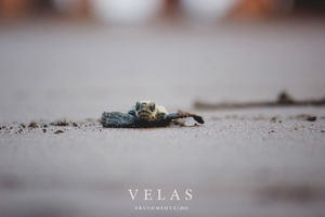 Velas - the final journey home...