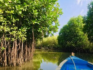A day trip  to second largest Mangrove Forest - Pichavaram