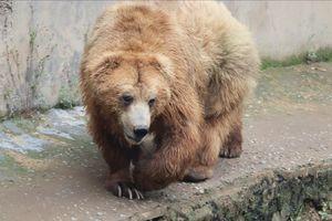 Kufri Zoo