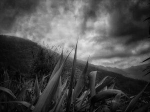 Monsoon in hills.