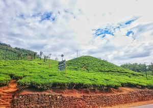 Shamrock hues of Kudremukh tea estates!