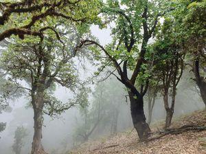 Fog-in-Jungle #colourgreen
