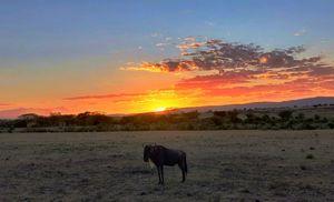 My Solo Trip to Masai Mara.