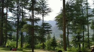 Beautiful forest of MANALI #colourgreen