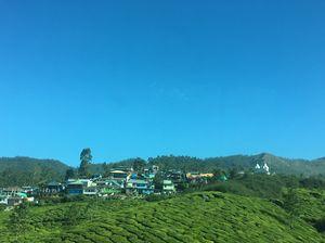 Mesmerizing Munnar #colourgreen