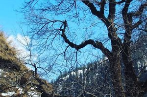 It's the lonely tree.. In the top of the mountain  Waiting for someone  To rest  Under the shade...
