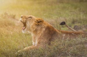 Masai Mara: More than just a wildlife safari!!
