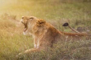 Masai Mara: More than just a wildlife safari!!