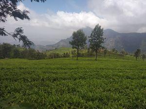 3 days into the Nilgiris