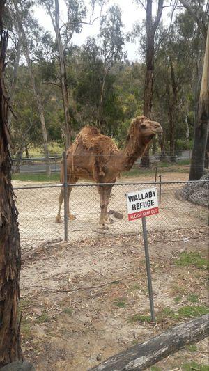 WILDLIFE PARK ,Adelaide(Australia)