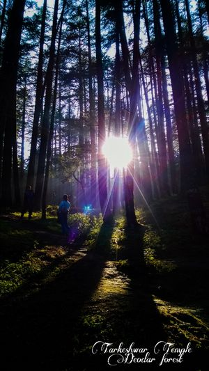 A Holy Shady Adventure between tall trees in forest