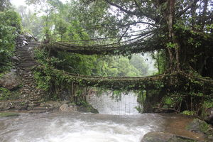 Living Root Bridges Tyrna, Cherapunji Meghalaya