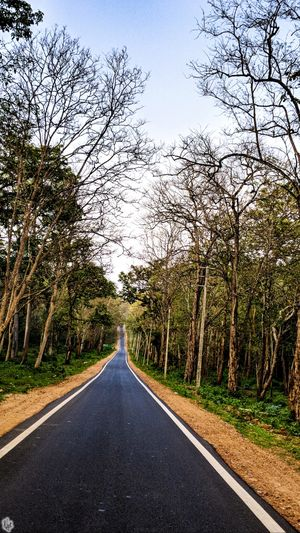 Old Town Road - a drive through the Bandipur National Park