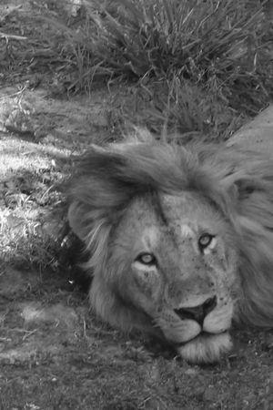Kenya - Masai Mara Nature Trail