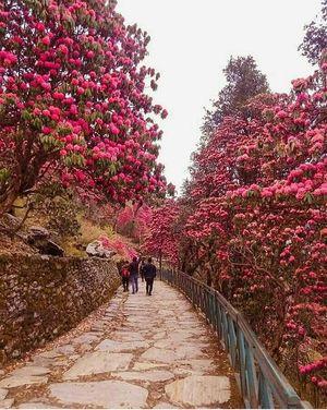 The enchanting trip to Chopta Tungnath Chandrashila