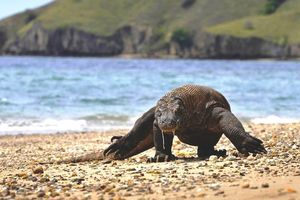 Komodo National Park 1/undefined by Tripoto