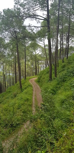 Roam and Relax - KASAULI, himachal