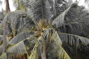 Kanyakumari; Travel hacks & Tips