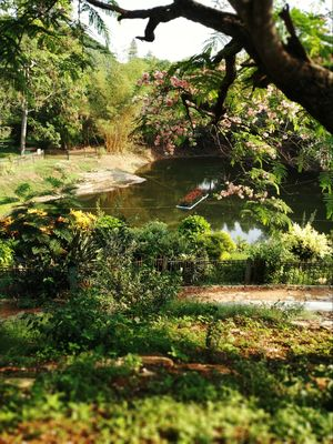 Lal Bagh scenes is no less than being in a Japanese garden!! @tripototravelcommunity