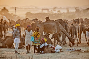 What makes Pushkar Camel Fair exclusive in Rajasthan?