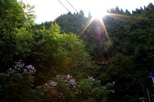 Sikkim-Nathula-Darjeeling