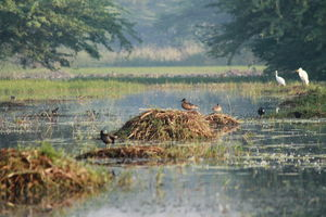 A Small Avian Universe near the Concrete Jungle: Sultanpur Bird Sanctuary
