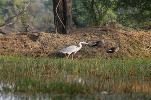 Keoladeo National Park,Bharatpur: Nature, Birds and colors!!