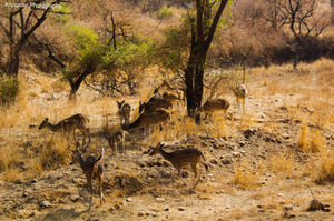 Into the Wild - Sariska Tiger Reserve