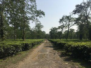 Tour of Dooars, WB, India