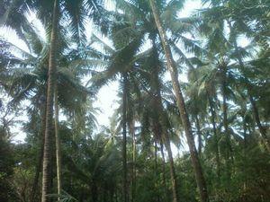 Dudhsagar Plantation and Farmstay 1/undefined by Tripoto