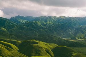 The journey to the valley of flowers,Dzukou Valley