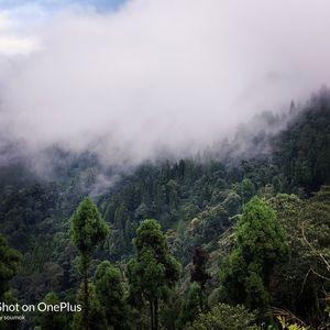 Neora valley , lava - Sikkim