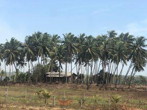 Intriguing Goa