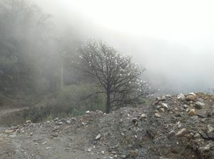 Sandakphu -- the land of clouds & lush green mountains covered with mist and magic...