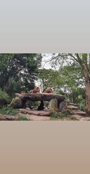 Taman Safari ,Indonesia