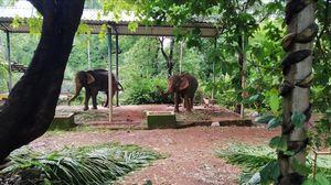 Weekend getaway to Jungle Book resort, near the Dudhsagar falls #junglestay