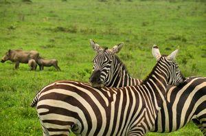 kenya wildlife safari 2019
