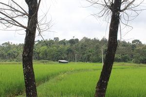 Sakleshpur :- The land with lush greenery
