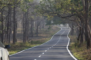 A Weekend Drive from Bangalore to Bandipur