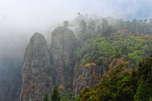 48 Hours of Exotic Greenery in the Princess of Hill stations called Kodaikanal#westernghatsinphotos