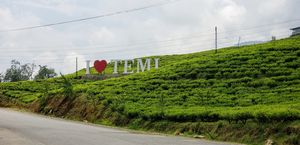 Temi Tea Estate 1/undefined by Tripoto